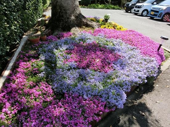 4月18日 クスノキ廻りの花壇